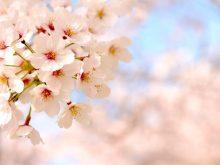 春分(二十四節気)の旬な食材