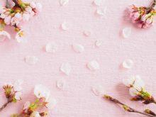 春の期間限定美容法!桜を利用して心も体も女子力UP!