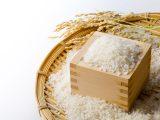 【お米の知識②】お米の品種