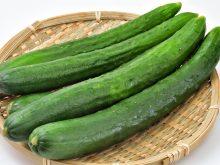 食材と栄養について「きゅうり」をもっと知ろう!